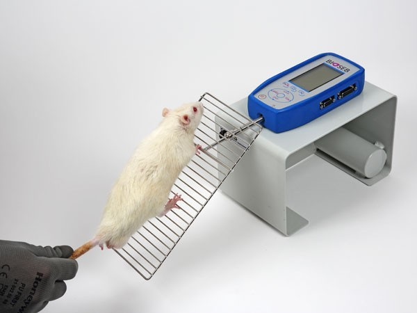 Bioseb\'s Grip Test - Rat using the grid for front paws