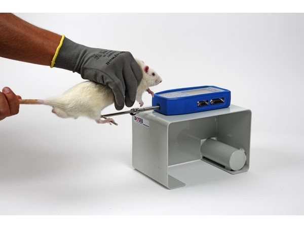 Bioseb\'s Grip Test - Rat using the bar for back paws