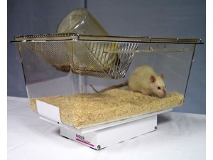 Bioseb\'s Activmeter with a rat