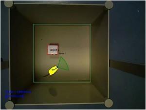 NORT3D - Novel Object Recognition Test 3D - Screenshot