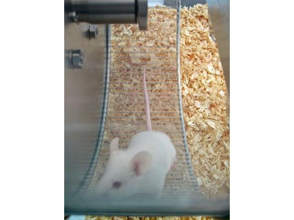 Bioseb\'s Activity Wheel: Rat in the wheel